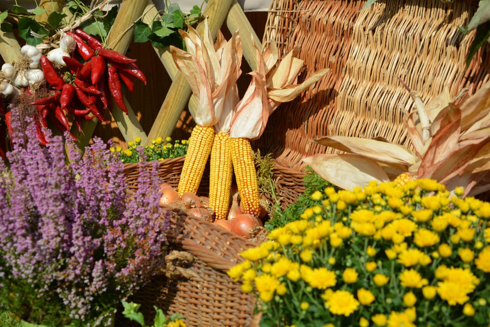 Vidéki hagyományok és ízek vására